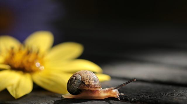 lenta - Mi tienda online Prestashop va lenta. ¿Solución?